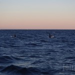 whales179